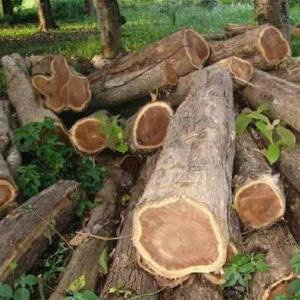 teak-wood-logs-500x500